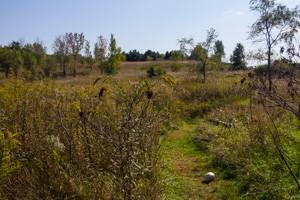 Looking over the prairie trail at Geneseo Prairie Park.